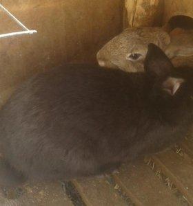 Продаю кроликов Верхняя березовка