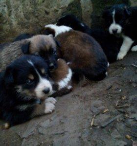 Спасти щенков