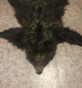 Ковёр из натуральной шкуры медведя!!!!
