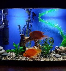 аквариум панорама 120 л.
