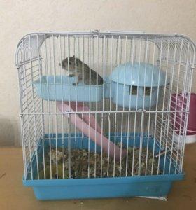 Мышки -песчанки