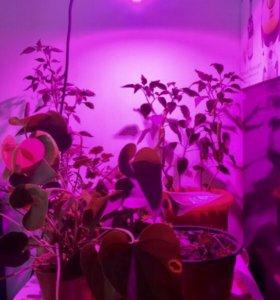 Ультраяркая Лампа для растений 50 ватт