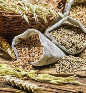 Пшеница, ячмень, овес, дробленка