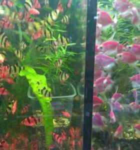 Аквариумные рыбки разные