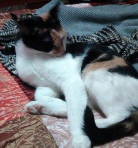Красивая молодая кошка