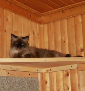 Передержка кошек на время вашего отъезда