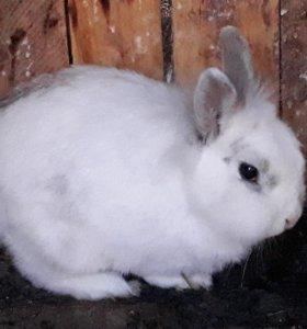 Кролик ищет дом🐇