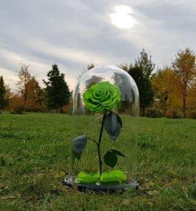 Зеленая роза в колбе КИНГ
