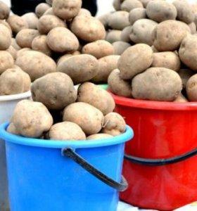 Продам едовой картофель