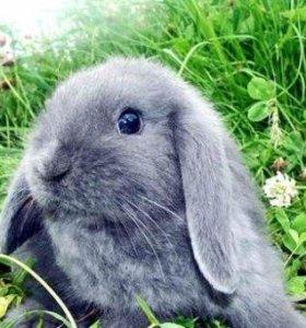 Кролик приученный к лотку