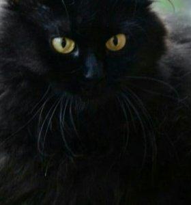 Стерилизованная молодая кошка