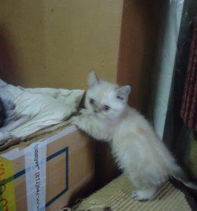 Котишка-малышка