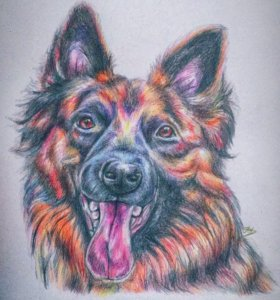 Портрет домашнего любимца, портрет по фото, собака