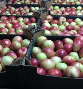 Менеджер по продажам фрукты