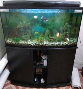 Продам аквариум 200 л.