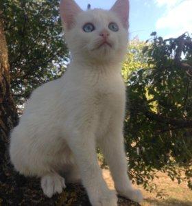 Белоснежный котик ищет заботливые руки