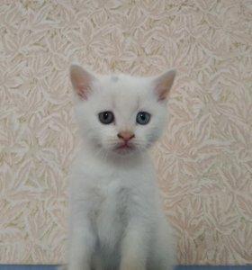 Котенок белый 🐈