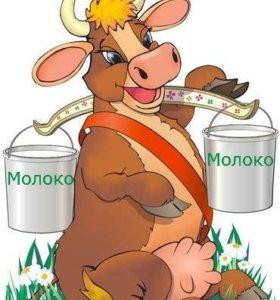 Продам корову бестужевская порода