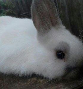 Декоратиный кролик
