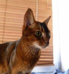 Дам кота в аренду для фотосессии
