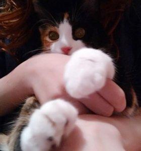 пропала кошка куки