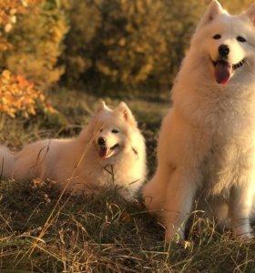 Аренда собак на фотосессию