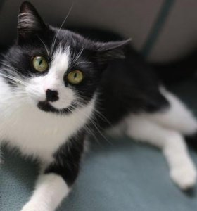 В с. Шишино пропала кошка