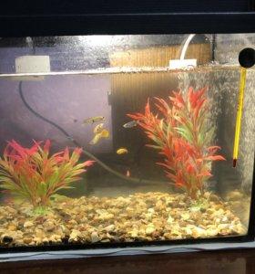 Продаю аквариум готовый с рыбками