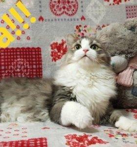 Котенок в дар.