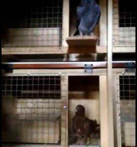 Паровочные ящики , гнезда, кормушка для голубей