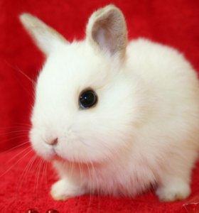 домашний питомник мини кроликов