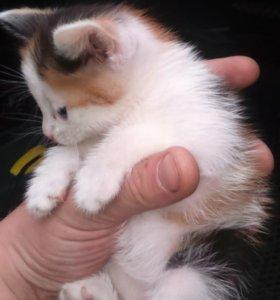 Котёнок. Девочка