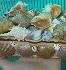 Шкатулка с морскими ракушками