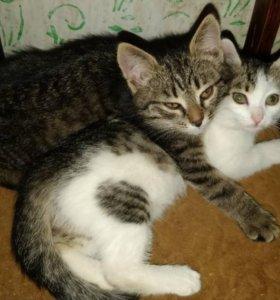 Кошки на пристрой