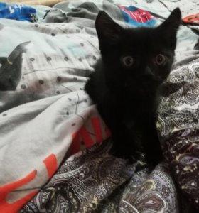 Отдам котёнка мальчик