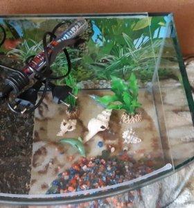 аквариум на 30 литров