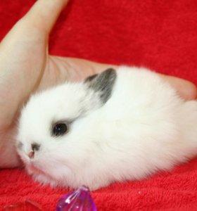 большой выбор мини кроликов.питомник