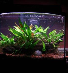 Профессиональные аквариумные лампы