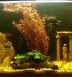 аквариум на 200 л