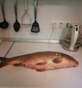 Цимлянская рыба