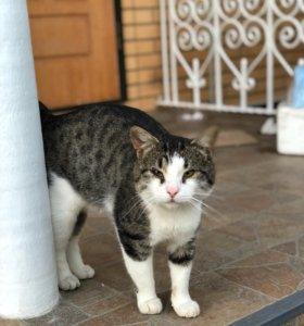 кот (Ищет дом)