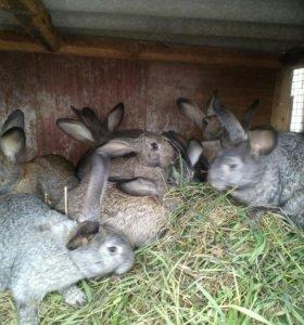 Кролики распродаю