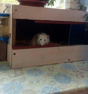 Крысёнок с приданным