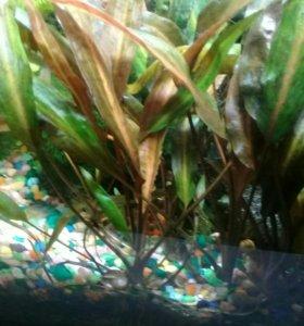 Срочно водоросли!!! Насос