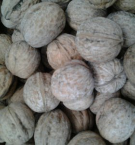 Отборные грецкие орехи