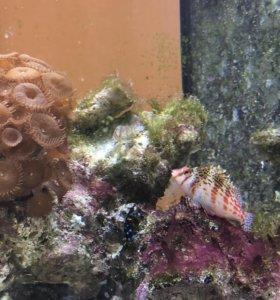 Морской аквариум с морскими обитателями
