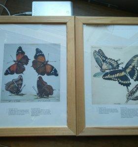Бабочки изображения для интерьера (репринт гравюр)