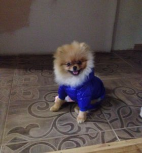 Зимний костюм и обувь для собак