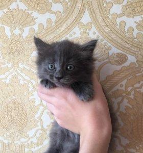Отдам котёнка, девочка