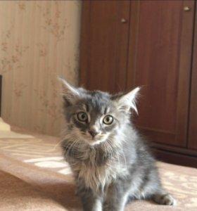 Красивые пушистые котята
